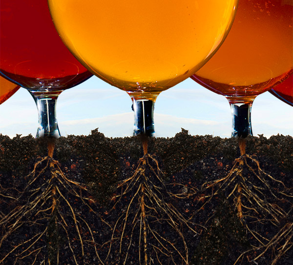 Roots of American Craft Brewing