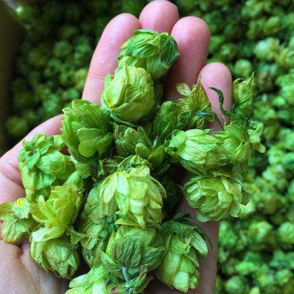 single-hop beers