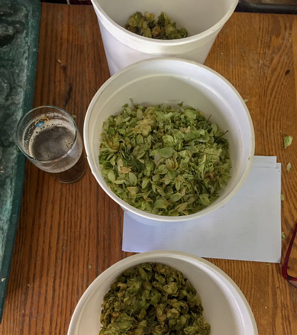 Smithsonian grown hops