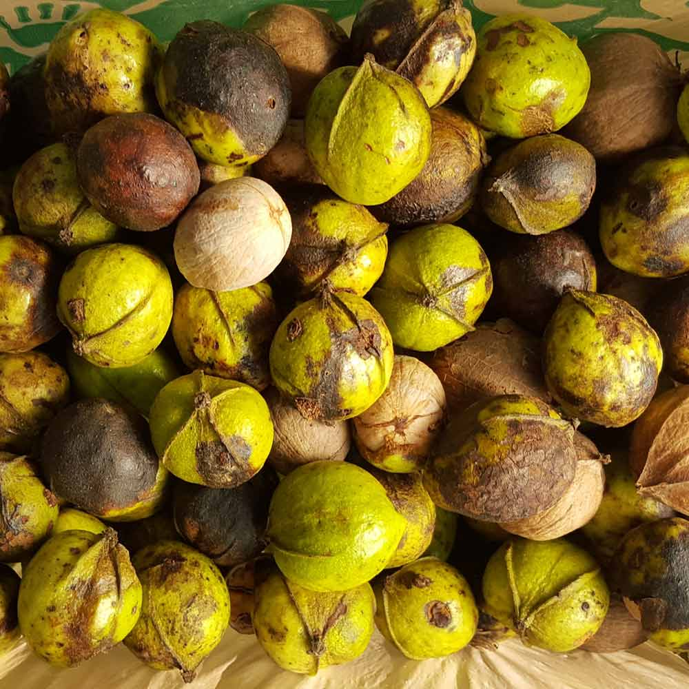 foraged hickory nuts