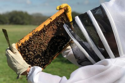 Busy Bees: Breweries Experiment with Beekeeping to Create Local Flavor