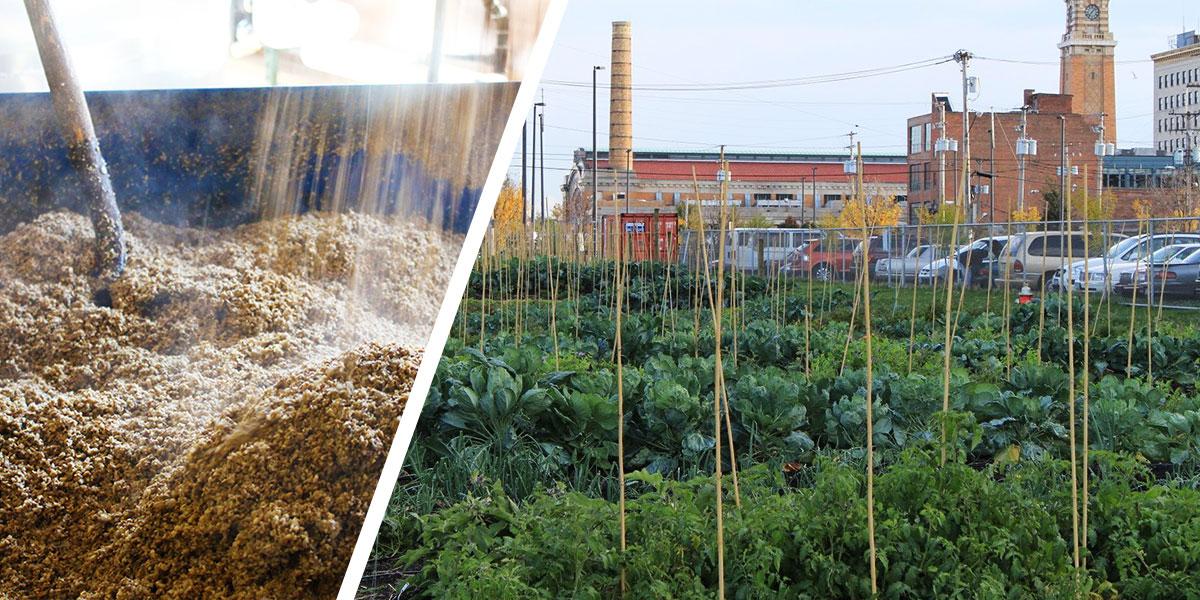 Spent Grain and Urban Farm