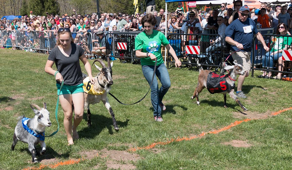 Sly Fox Bock Festival and Goat Races
