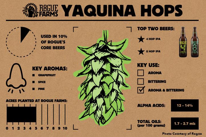 taquina-hops
